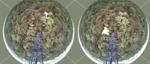 Imagem de uma das câmeras instaladas no cerrado com identificação de seis espécies vegetais, em branco. As duas primeiras acima, por exemplo, mostram, à esquerda, a peroba-do-cerrado (Aspidosperma tomentosum) e, ao lado, o pequi (Caryocar brasiliensis)
